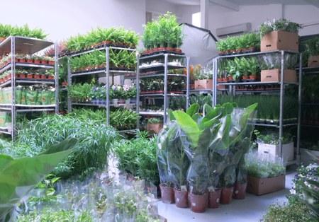 Covid-19: Informations concernant la vente de plantes