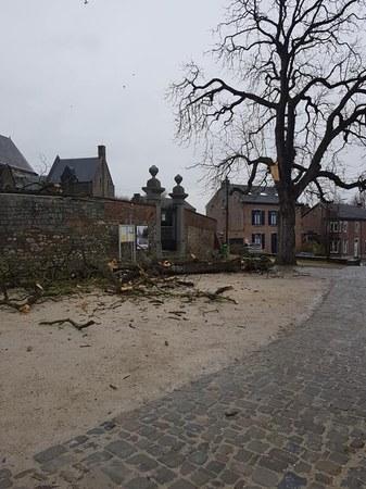Arrêté du Bourgmestre délimitant une zone de sécurité autour d'un marronnier malade menaçant de tomber, Place M.Hicter à Momalle.